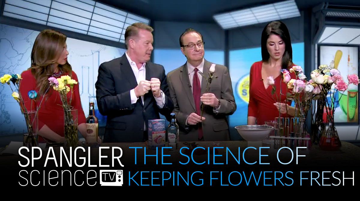 The Science of Keeping Flowers Fresh with Steve Spangler 9NEWS