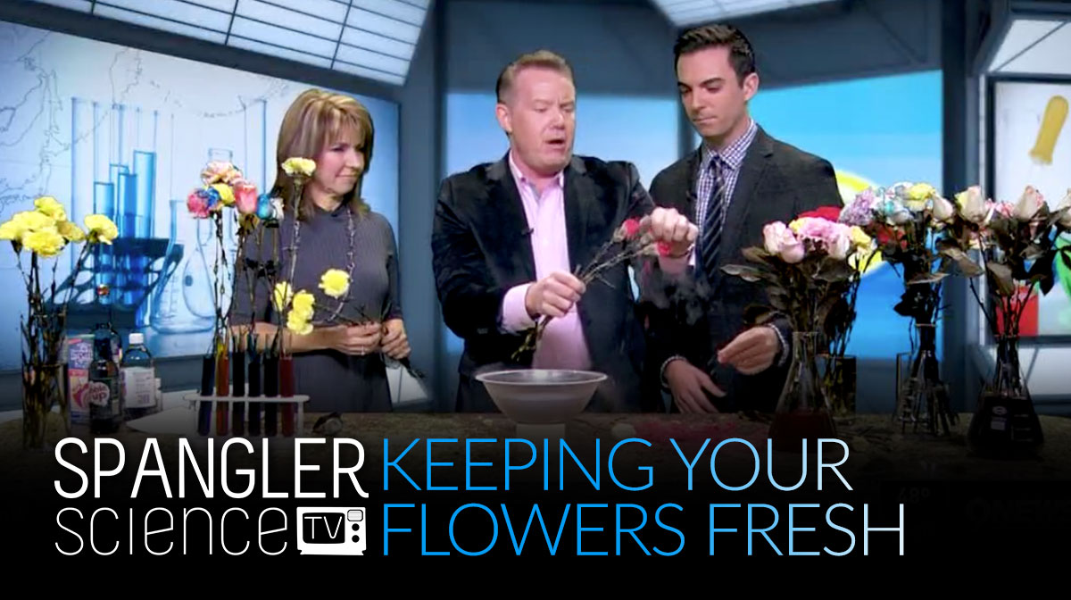 Keeping Your Flowers Fresh with Steve Spangler 9NEWS